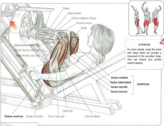 leg press picture