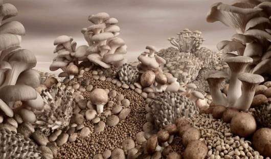 Mushroom-Landscape-photo