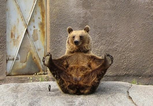 You Know Nothing About Yoga. These Animals Do!
