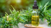 Cannabis and cbd oil in a bottle on the wooden background