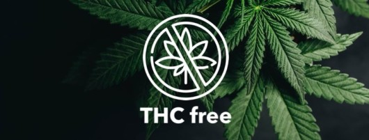 Cannabis leaf on the black background with a sign THC free