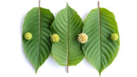 Kratom leaves on white background