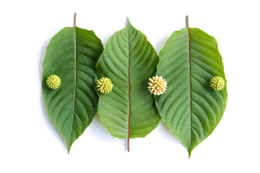 American Kratom Association and Its Roles