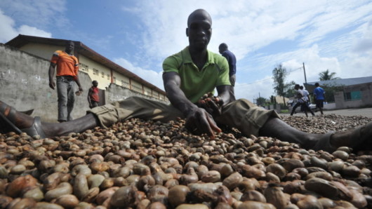 A black worker work hard and manually select cashews