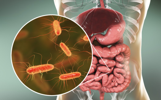 A picture of a 3d gut system in a transparent body with enlarged microbiome
