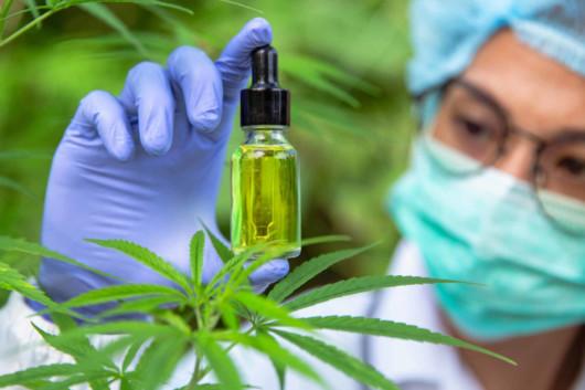 Scientist is examining the cbd oil